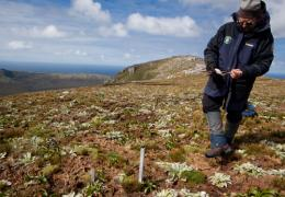 Plant transect